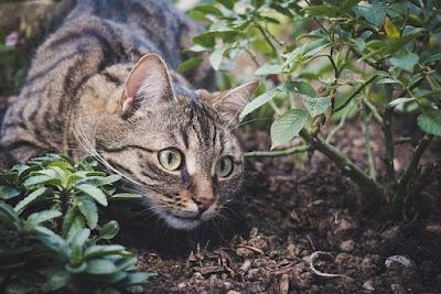 बिल्ली के गले में घंटी कौन बांधेगा in english, billi ke gale mein ghanti kaun banega in english, gale ki ghanti in english, बिल्ली के गले में घंटी meaning, बिल्ली के गले में घंटी कहानी लिखी हुई