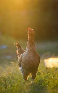 5 Resep Opor Ayam Lebaran Ambyar Enak