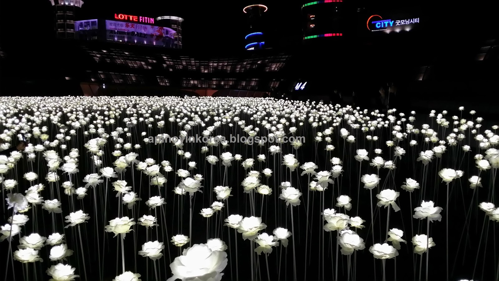 A Pinoy in Korea  Dongdaemun s 20 000 White Flowers  A Garden By Day     A Pinoy in Korea  Dongdaemun s 20 000 White Flowers  A Garden By Day  A  Galaxy Of Stars At Night