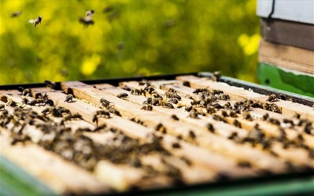 Τα προϊόντα που προέρχονται από μέλισσες πιθανόν να καταστέλλουν τα καρκινικά κύτταρα