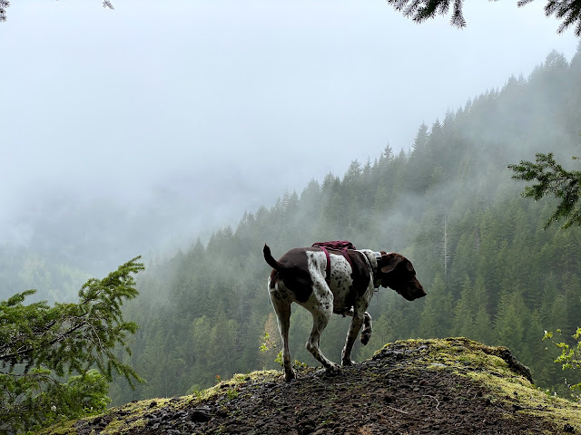 Cedar the dog in front of a foggy view of evergreen forest