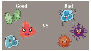 Useful Bacteria
