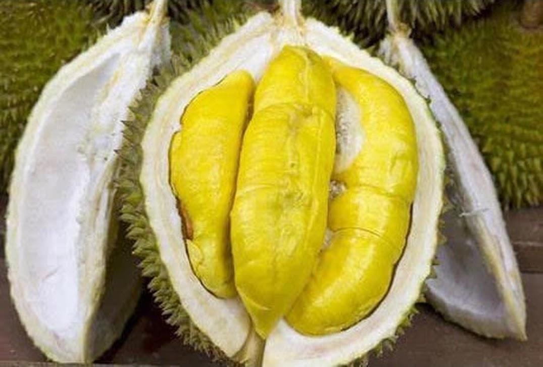 Ready bibit durian petruk bibit buah tanaman Cirebon