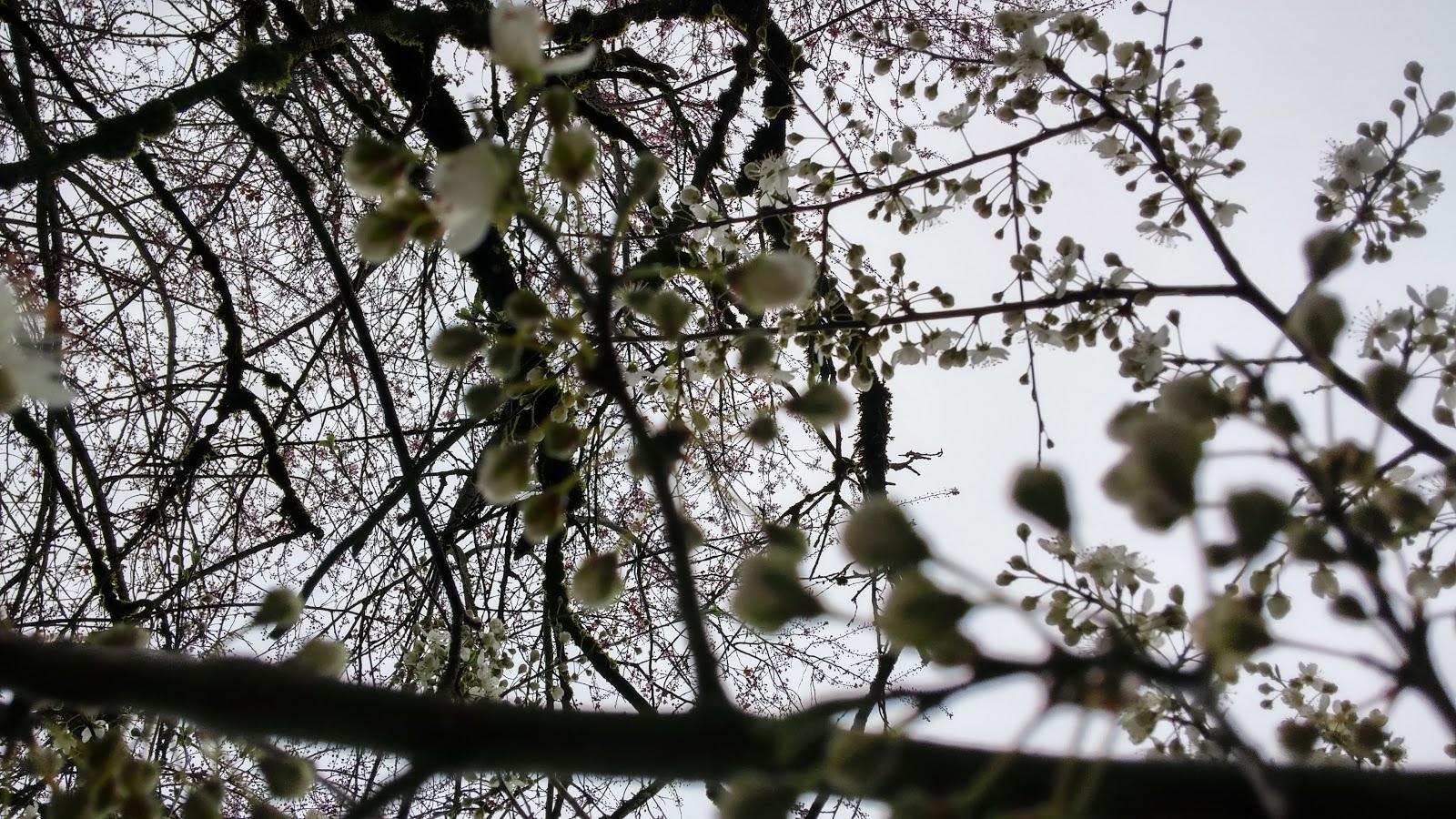Spring, bringing its beauty