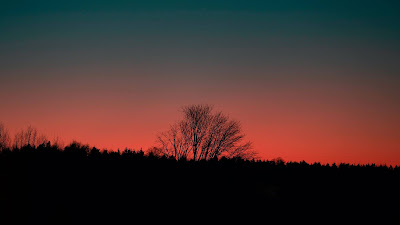 HD Wallpaper Sunset, Dusk, Tree, Silhouette