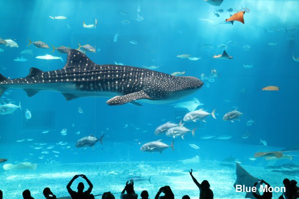 Image Result For Aquarium Backpack