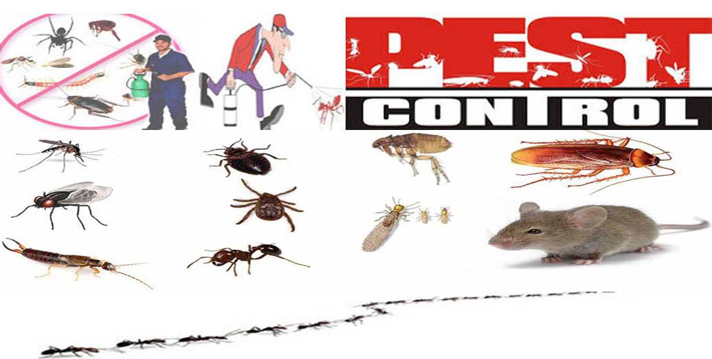 Jasa Pest Control di DKI Jakarta