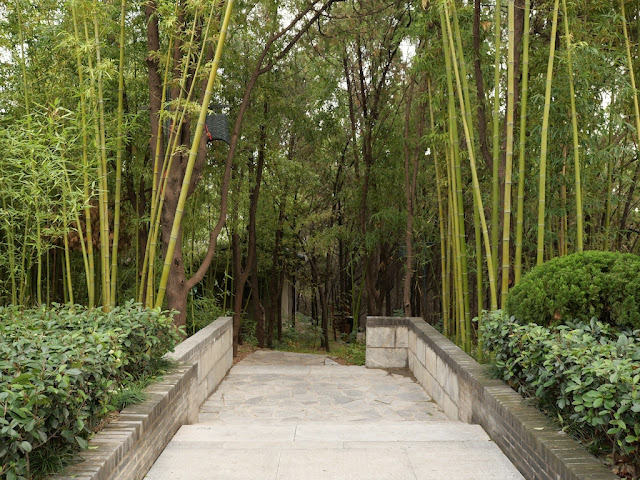 path through trees and bamboo