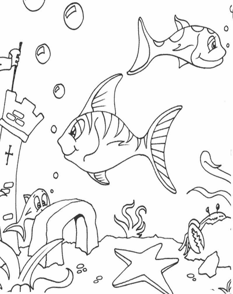 Contoh Gambar Mewarnai Hewan Laut