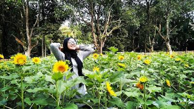 Taman Bunga Poska Pematang, Banua Lawas, Tabalong, Kalsel