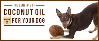 Can I Use Coconut Oil On My Dog S Paws