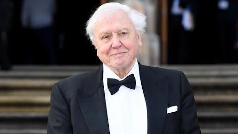 Hoppá: David Attenborough új sorozattal jelentkezik