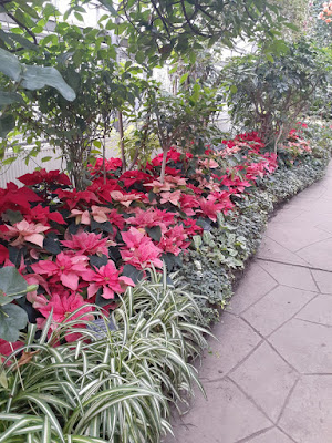 Allan Gardens Conservatory 2019 Winter Flower Show twentyone by garden muses--not another Toronto gardening blog