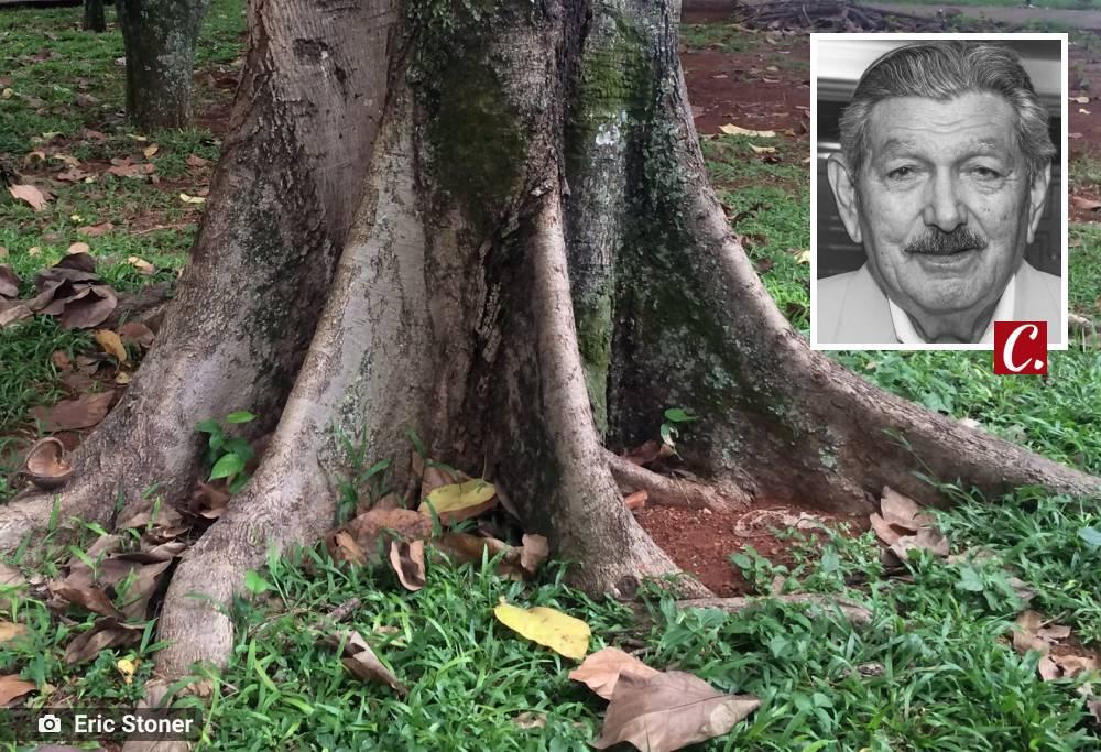 literatura paraibana piroa alagoa nova cemiterios sepultamento florestas