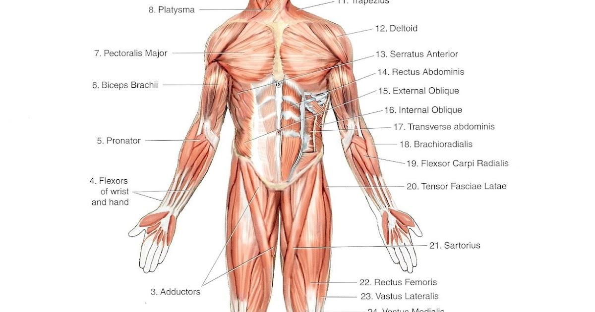 tratamentul artrozei cu hel unguente pentru dezvoltarea articulațiilor după fracturi