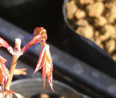 芽摘み 後