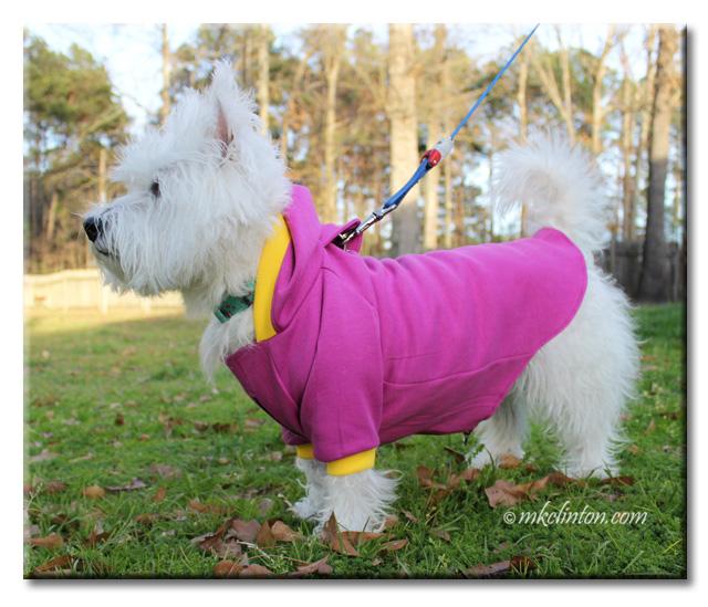 Westie in PrideBites hoodie