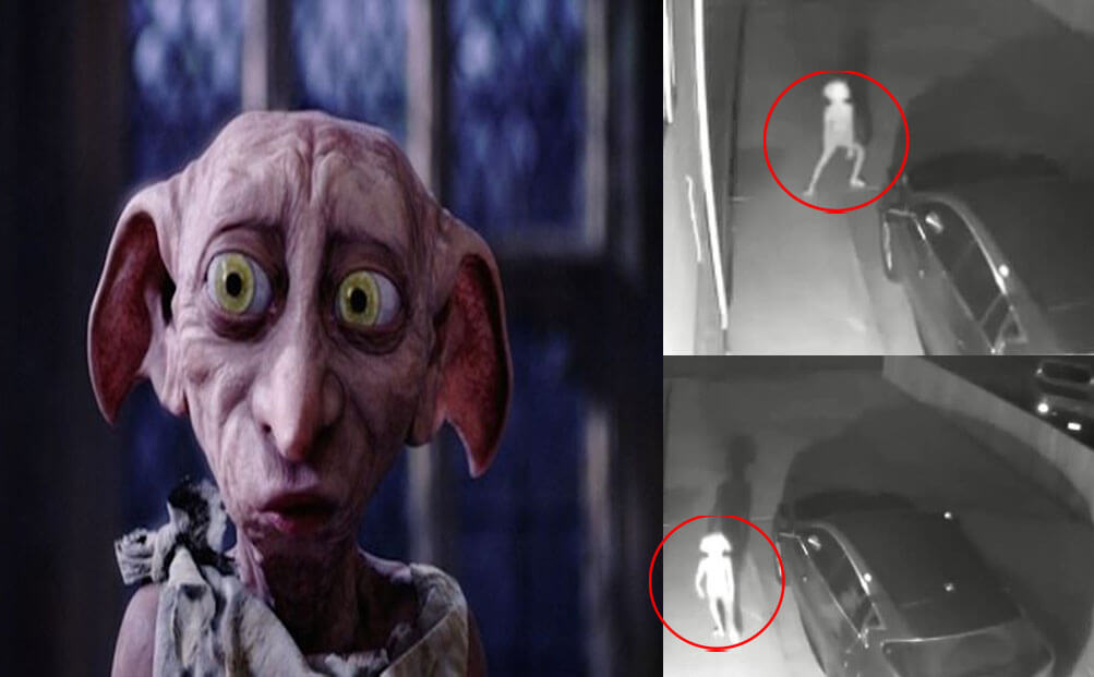 ,مخلوق غريب,يثير الرعب, دوبي قزم ,Dobby is a free elf