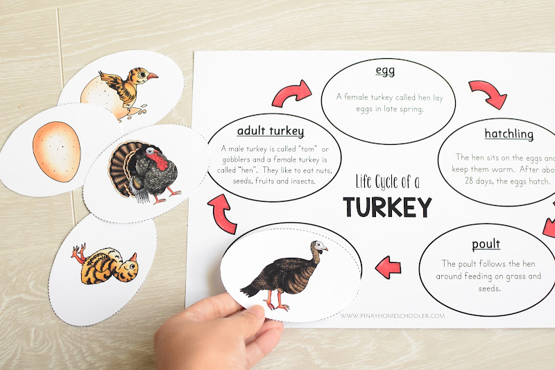 TURKEY LIFE CYCLE CHART