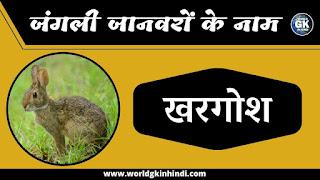 Rabbit animal name in hindi