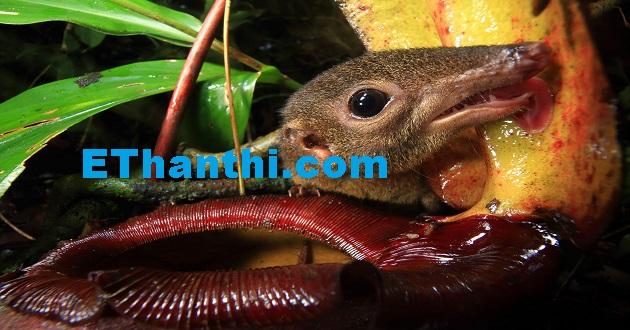பூச்சி உண்ணும் தாவரம்   Pest-feeding plant !