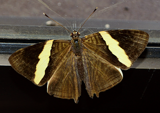Butterfly in Puriscal