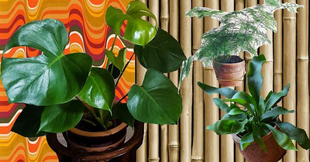 Plants on a patterned background