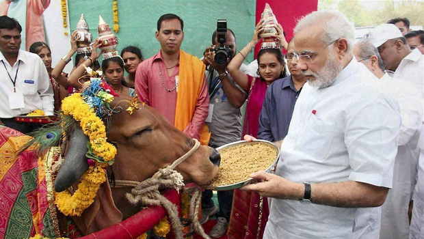 Why was The Cow a Sacred Animal for the people of India?