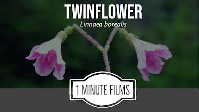 Short Nature Film