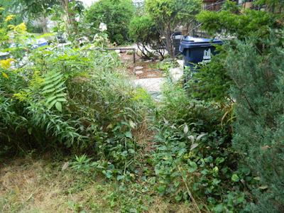 Toronto Summer Front Yard Cleanup in Koreatown Before by Paul Jung Gardening Services--a Toronto Organic Gardener