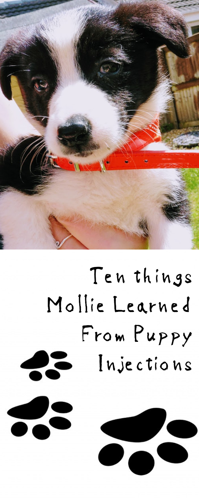 Ten things Mollie Learned From Puppy Injections