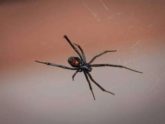 Three Children Cut Themselves Off From The Black Widow Spider To Become Spider-Man