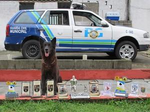 Canil da Guarda Civil de Praia Grande leva prêmio em torneio
