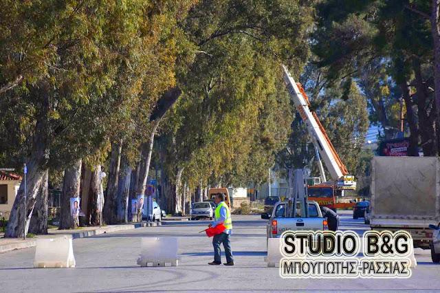 Κοπή ευκαλύπτων και διακοπή κυκλοφορίας στο Ναύπλιο την Πέμπτη