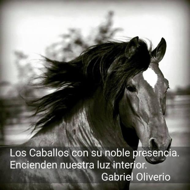 Resultado de imagen de frases sobre emociones y caballos