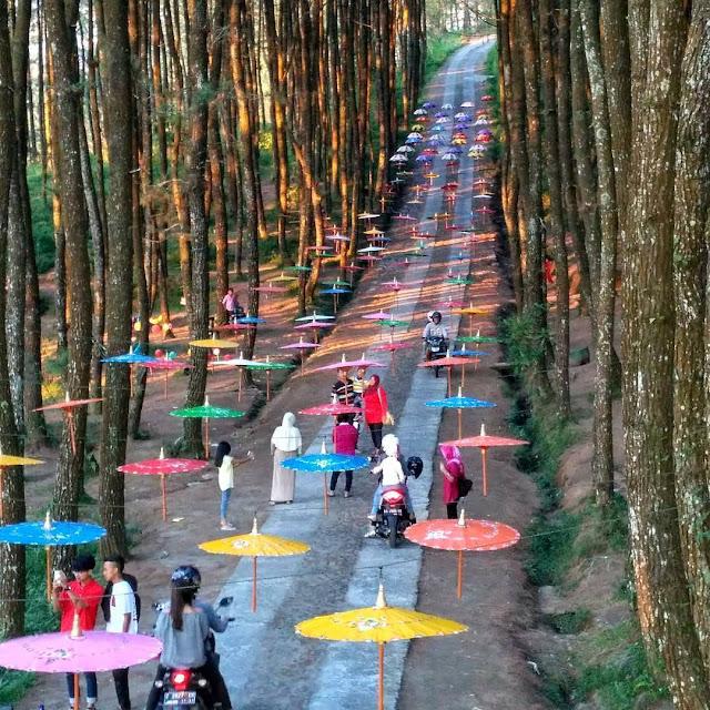 Hutan Pinus Kragilan Magelang