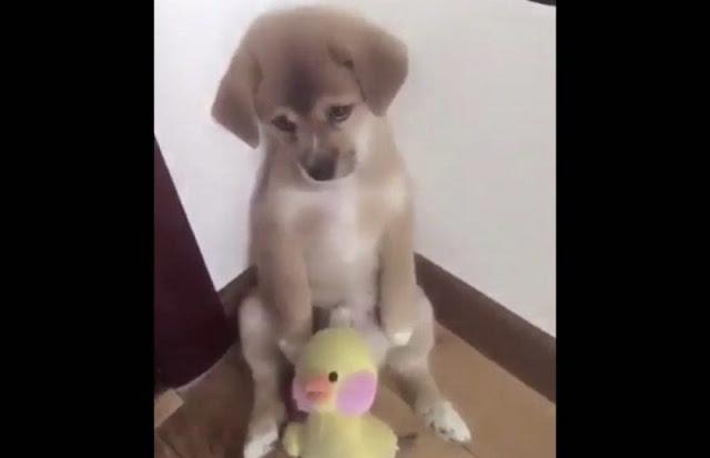 La conmovedora reacción de un perrito al ser regañado por su dueño causa ternura en redes. (VIDEO)