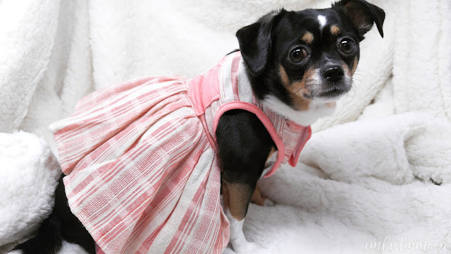 Bond & Co. Woven Pink Stripe Dog Dress