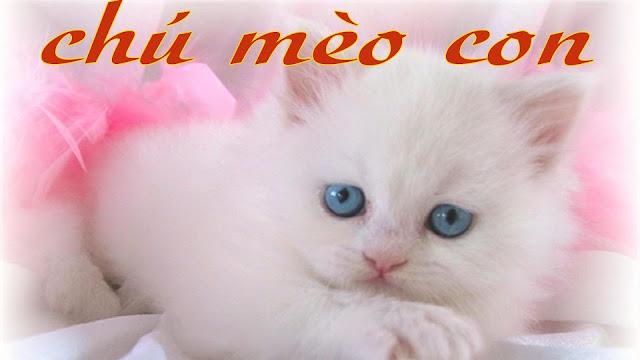 Chú Mèo Con - Nhạc Thiếu Nhi Vui Nhộn Hay Nhất