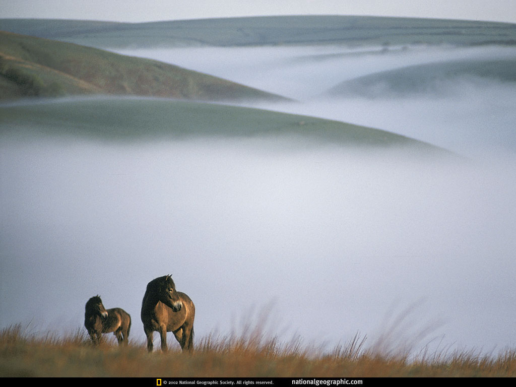 Animal mother and baby 4 national geographic - National geographic wild wallpapers ...