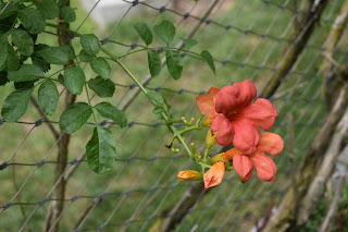 An orange flower against a wire fence and green background of leaves.
