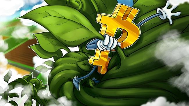 phân tích bitcoin|Bitcoin|BTC