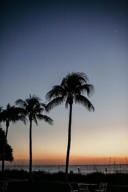 Naples Beach Hotel Palm trees