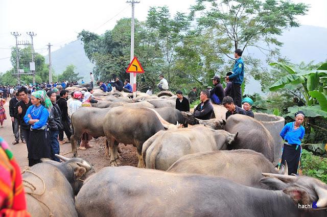 Coc Pai market 3