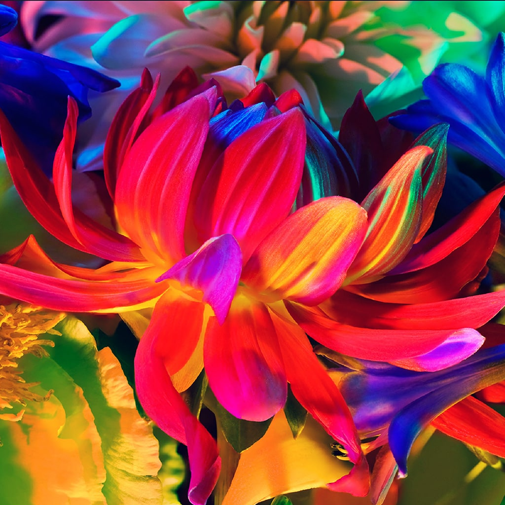 wallpaper, fiori