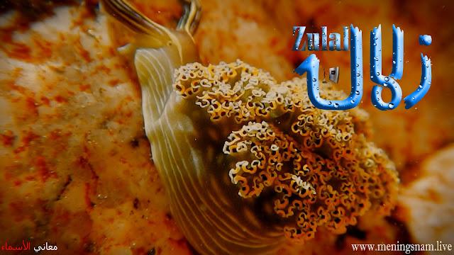 معنى اسم زلال وصفات حاملة و حامل هذا الاسم Zulal