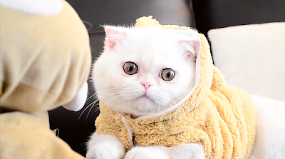 Top Ten Most Popular Cat Breeds