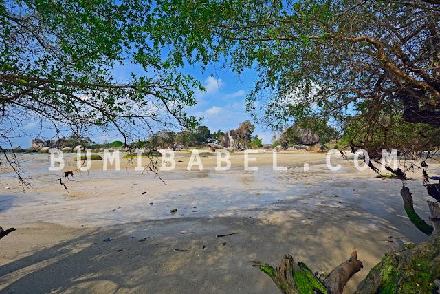 daun-kayu-mentigi-di-indonesia-bangka