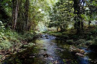 Forest Stream - Photo by Karim Sakhibgareev on Unsplash