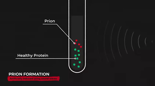 protein misfolding cyclic amplification